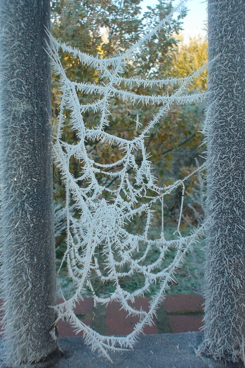 "Downloaded from Flickr's Creative Commons. Thank you to ""Amortize"" for sharing -- I've never seen a winter web like this. It was taken in the central England in 2005."