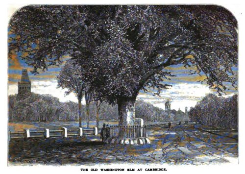 The Washington Elm (Scribner's Magazine May 1876)